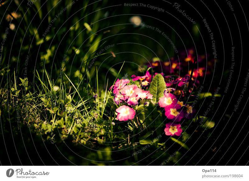 Alice im Wunderland Umwelt Natur Landschaft Pflanze Tier Erde Sonnenlicht Frühling Sommer Schönes Wetter Blume Gras Sträucher Moos Blüte Grünpflanze Nutzpflanze