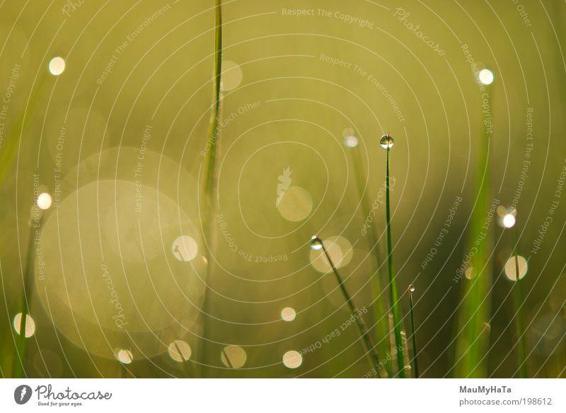 Ein Morgentau Natur Pflanze Urelemente Wasser Wassertropfen Sonne Sonnenlicht Frühling Gras Garten Park Urwald Mikrowelle Spiegel Kristalle Tropfen Globus