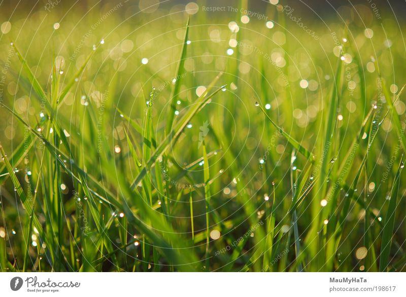 Natur Wasser weiß grün Pflanze Sonne schwarz gelb Gras grau Garten lustig Park Regen gold Klima
