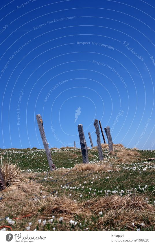 Windschief Ausflug Sommer Sommerurlaub Sonne Berge u. Gebirge Umwelt Natur Landschaft Pflanze Wolkenloser Himmel Horizont Frühling Schönes Wetter Gras Sträucher