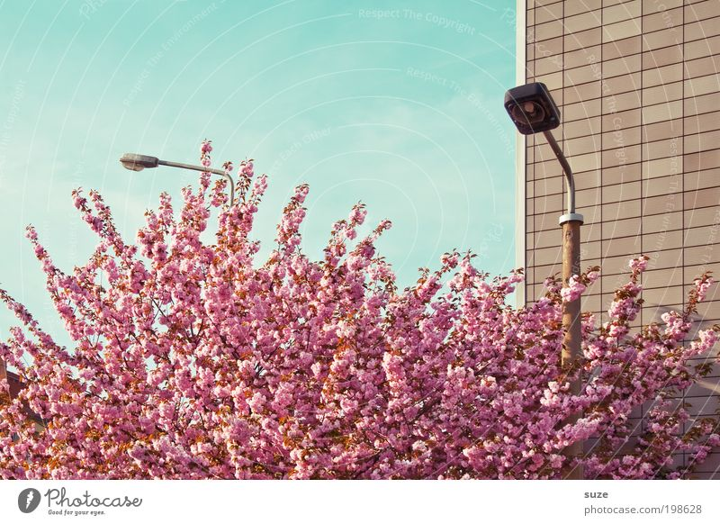 Voll im Lenz schön Ferien & Urlaub & Reisen Umwelt Natur Pflanze Himmel Frühling Schönes Wetter Baum Sträucher Blüte Fassade Blühend Wachstum ästhetisch