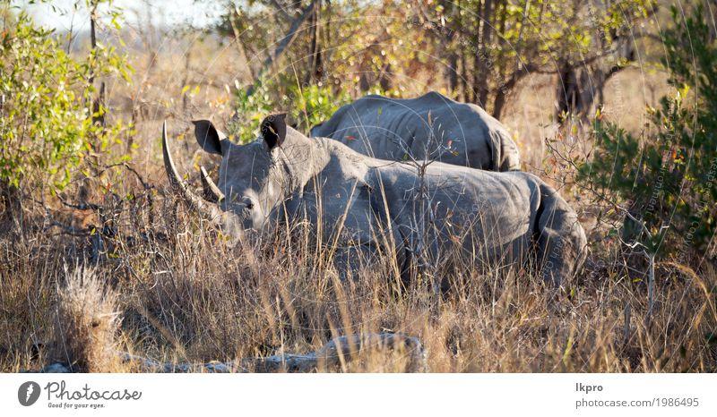 Natur Pflanze weiß Baum Tier schwarz Gras Tod grau Tourismus wild Park Körper Haut groß gefährlich