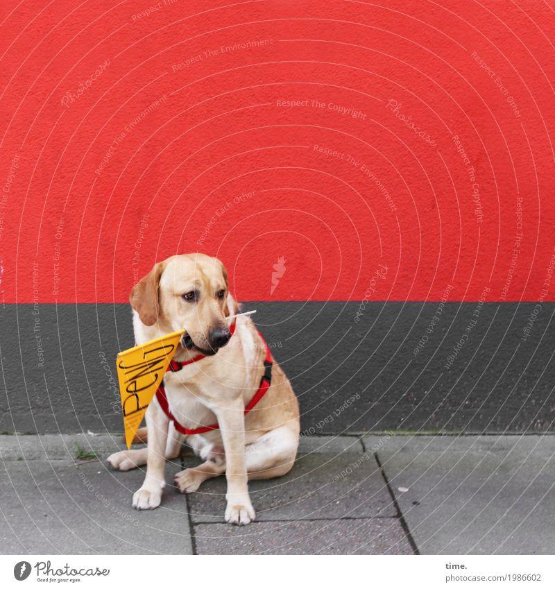 HH17 Fähnchentour | Kundgebung Hund Tier Wand Wege & Pfade Mauer Stein Stimmung sitzen warten beobachten Bürgersteig Fahne Konzentration Respekt Ausdauer Nervosität
