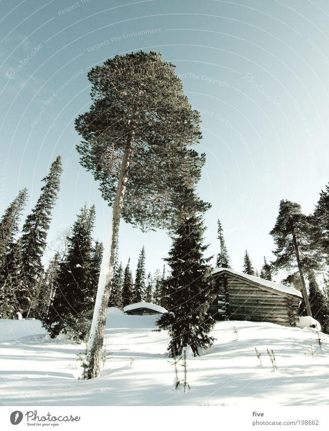 luosto XV Himmel Natur weiß Baum Pflanze Ferien & Urlaub & Reisen Winter Haus Ferne Wald kalt Wiese Schnee Freiheit Landschaft Umwelt