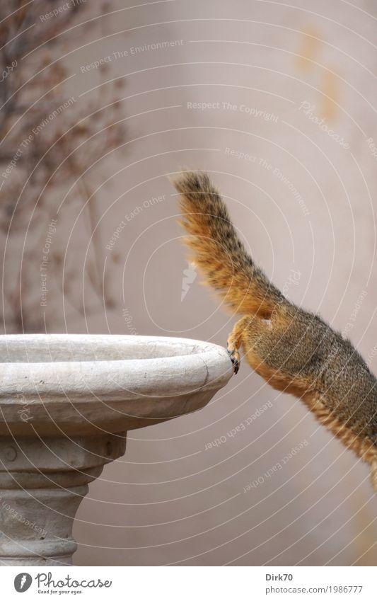 Eichhörnchen-Studie III: ... flüchten! Natur Tier Frühling Sträucher Garten Park Boulder Colorado USA Mauer Wand Ziervase Vase Wildtier Nagetiere Tierporträt 1