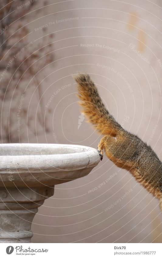 Eichhörnchen-Studie III: ... flüchten! Natur Tier Wand Frühling Mauer klein Garten Stein springen Park frei Wildtier Sträucher USA Geschwindigkeit Beton
