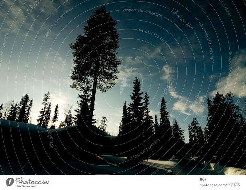 luosto XVI Himmel Natur Baum Pflanze Ferien & Urlaub & Reisen Wolken Winter Ferne Wald kalt Wiese Schnee Freiheit Umwelt Ausflug Tourismus