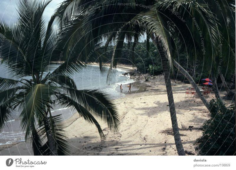 Strand- Idylle Sommer Palme Ferien & Urlaub & Reisen Meer Paradies Wasser