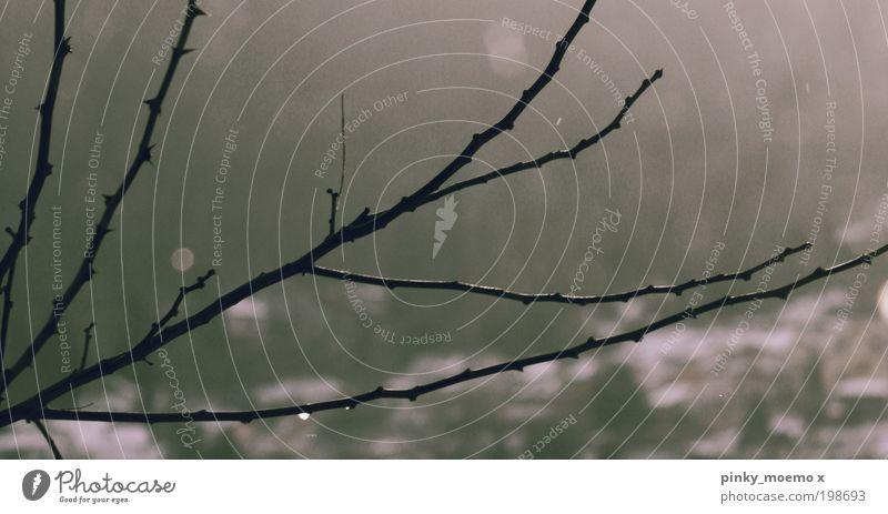 reach the sky Umwelt Natur Luft Pflanze Baum Stimmung Wahrheit Ehrlichkeit authentisch Kraft Wachstum Wandel & Veränderung Farbfoto Gedeckte Farben