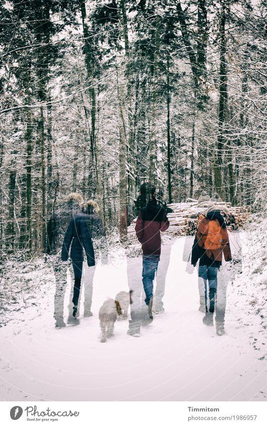 (3 + 1) x 2. Mensch Umwelt Natur Winter Schnee Baum Wald Tier Hund Erholung gehen rosa Lebensfreude Zusammensein Spaziergang Wege & Pfade Doppelbelichtung