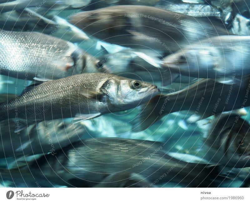 durcheinander Ferien & Urlaub & Reisen Wasser Meer Tier Umwelt Bewegung Schwimmen & Baden Zusammensein Ausflug glänzend Wellen Glas Wildtier Tiergruppe nass