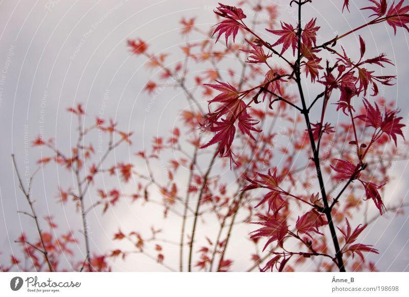 Neulich im botanischen Garten Natur blau Pflanze Blatt Frühling Freiheit grau Landschaft Luft rosa Umwelt frei ästhetisch Wachstum Sträucher