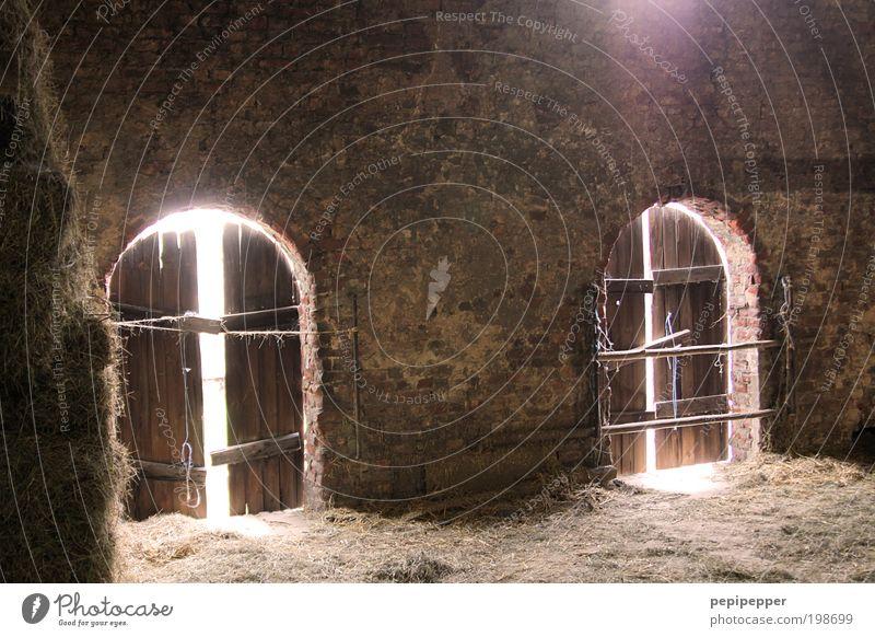 Mystik alt Holz Stein Gebäude braun gold Kirche Bauernhof Dorf Burg oder Schloss Bauwerk Ruine Spinne Haus