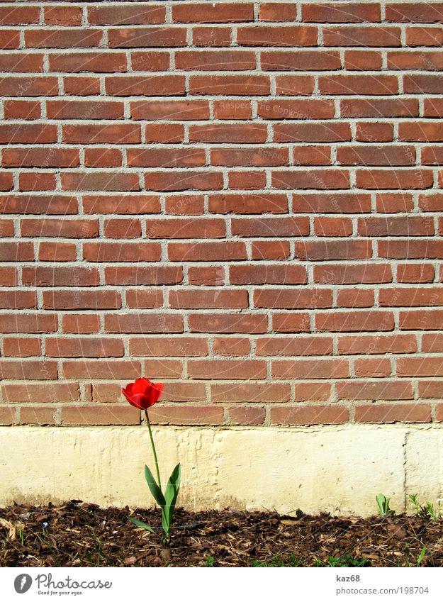 allein allein Natur schön Pflanze rot Blume Einsamkeit Haus Leben Wand Blüte Garten Gebäude Mauer Frühling Park Kirche