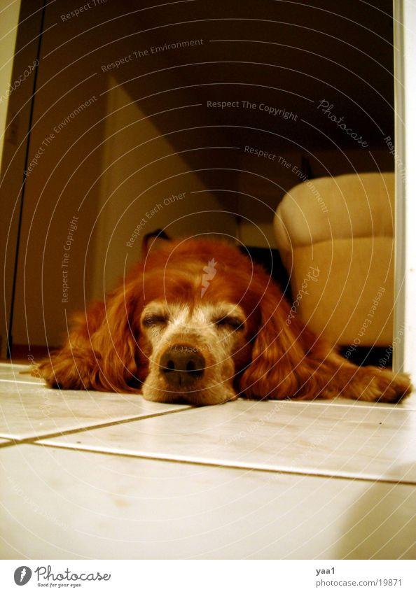 Mein Hund Margo Wohnung schlafen