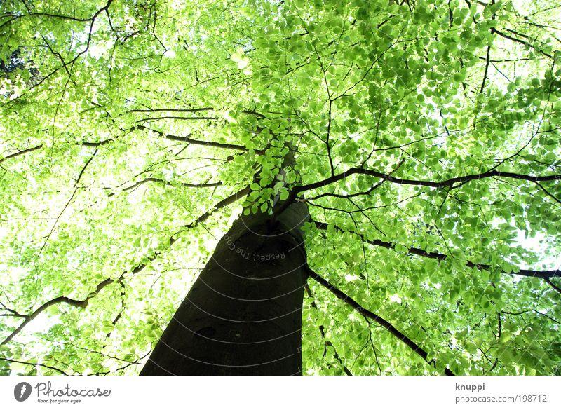 Grünes Blätterdach Himmel Natur grün Baum Pflanze Sonne Sommer Wald Umwelt Frühling Holz Freiheit Park Ausflug Dach Schönes Wetter