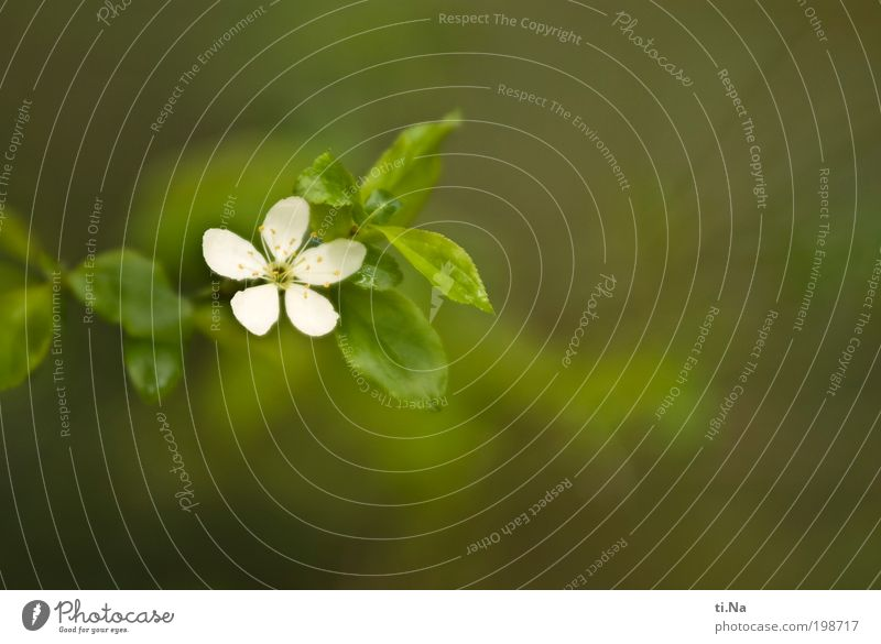 Raus in den Garten Natur weiß grün ruhig Tier Leben Erholung Wärme Landschaft Zufriedenheit hell Umwelt ästhetisch Wachstum Beruf