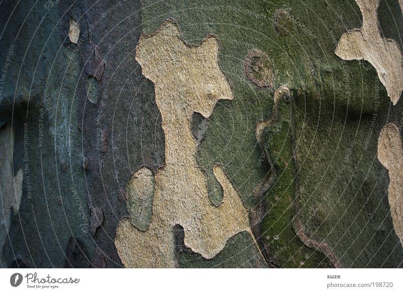 Tarnung Natur alt Baum grün braun Umwelt trist Vergänglichkeit natürlich Verfall trocken verstecken Baumstamm Landkarte Fleck