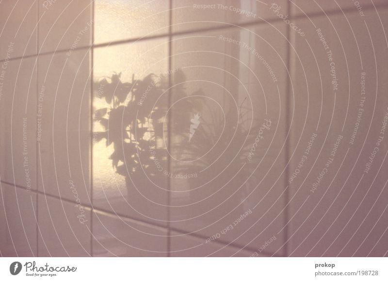 Flora auf dem Klo Pflanze Topfpflanze einfach Fliesen u. Kacheln Bad Reflexion & Spiegelung Linie Sauberkeit Grafische Darstellung zart Rechteck Perspektive