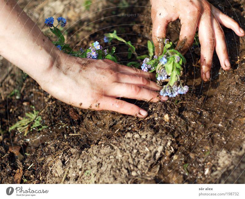 Vergissmeinnicht die Zweite blau Hand grün schön Pflanze Blume ruhig feminin Frühling Garten Erde braun Arbeit & Erwerbstätigkeit Freizeit & Hobby Beginn Wachstum