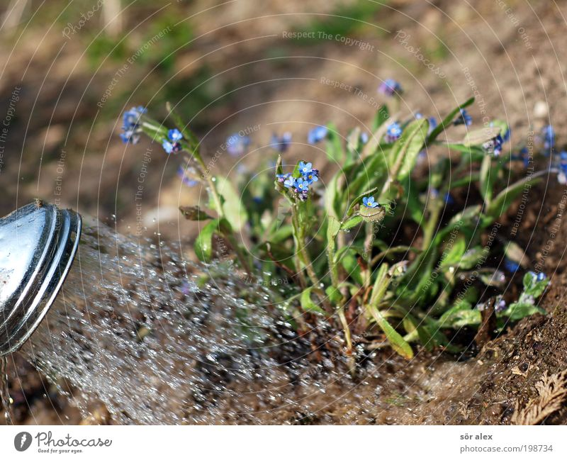 Gartenarbeit die Zweite blau Wasser grün schön Pflanze Blatt ruhig Erholung Blüte Metall Erde braun Arbeit & Erwerbstätigkeit Freizeit & Hobby nass