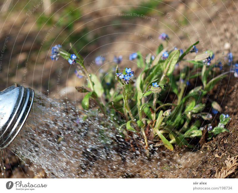 Gartenarbeit die Zweite Erde Wasser Pflanze Blüte Vergißmeinnicht Duschkopf Metall Arbeit & Erwerbstätigkeit Blühend Wachstum nass schön blau braun grün