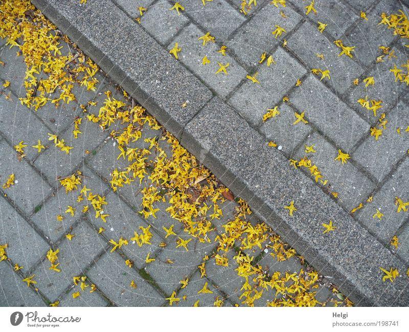 verblüht... Umwelt Frühling Blüte Dorf Verkehrswege Straße Bürgersteig Stein Beton Blühend liegen dehydrieren authentisch eckig klein gelb grau Reinlichkeit