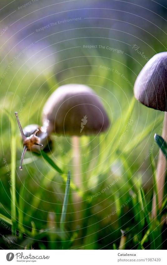 Abhängen Natur Pflanze Tier Herbst Schönes Wetter Gras Pilz Wiese Schnecke 1 Bewegung sportlich glänzend schleimig braun grün violett schwarz Optimismus Erfolg