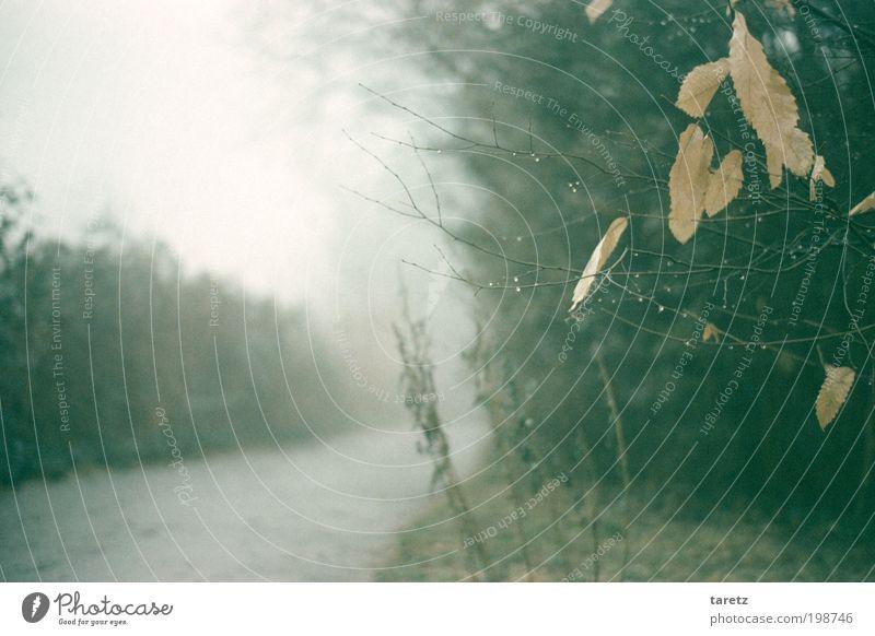 Irgendwie grau heute Herbst Nebel Blatt Wassertropfen Wege & Pfade fluchtend Sträucher ruhig hell Zweig Einsamkeit Winter alt Vergänglichkeit Farbfoto