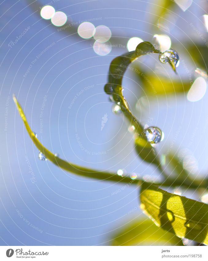ein schöner tag... Wasser Wassertropfen Himmel Sonnenlicht Frühling Sommer Schönes Wetter Blatt Park frisch glänzend nass grün Zufriedenheit Frühlingsgefühle