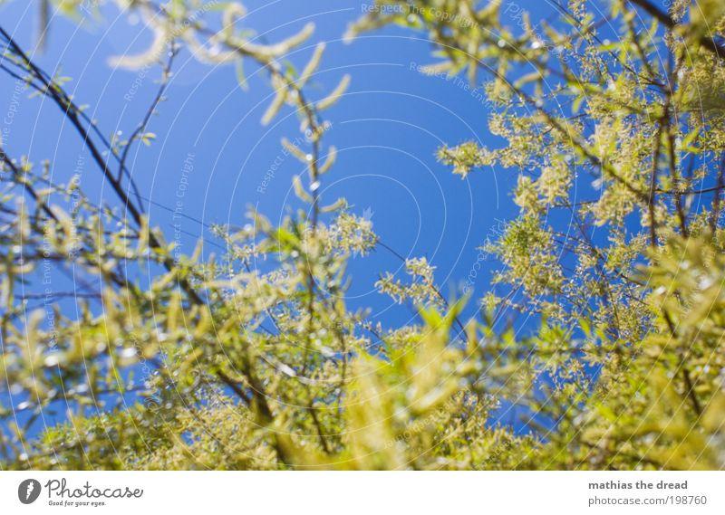MEIN FREUND DER BAUM Umwelt Natur Landschaft Pflanze Himmel Sommer Klima Schönes Wetter Wärme Baum Blatt Blüte Grünpflanze Blühend Duft Wachstum blau grün Ast