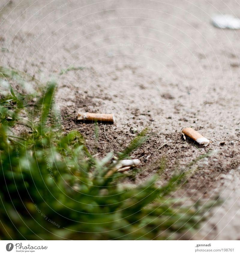 Müllkippe Natur Pflanze Erde dreckig authentisch Schutz Duft Zigarette Grünpflanze vernünftig Akzeptanz Zigarettenstummel