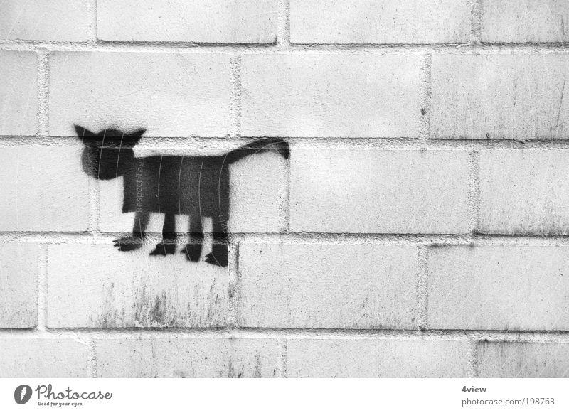 Katerstimmung Tier Schwarzweißfoto Dekoration & Verzierung Zeichen Bauwerk Fährte Inspiration