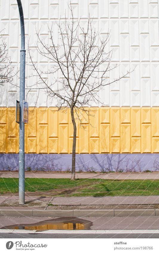 color up your life. Schönes Wetter Baum Stadt Haus Fassade Laterne Rasen Streifen gelb Frühling schön einzigartig Wohngebiet Plattenbau Farbfoto mehrfarbig
