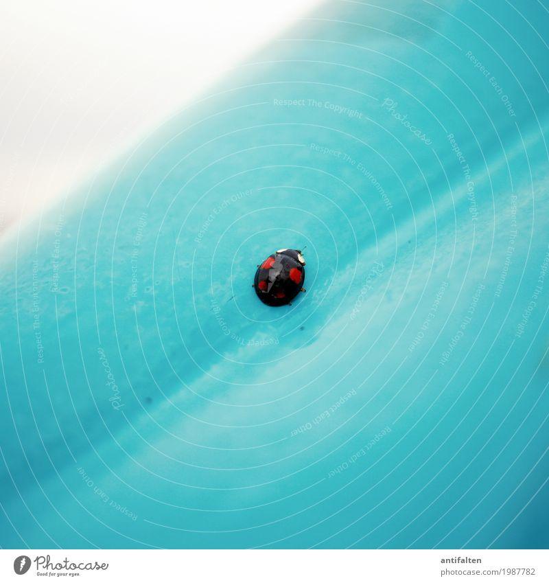 Viel Glück, Mella! rot Tier schwarz natürlich fliegen glänzend Fröhlichkeit Flügel Lebensfreude Punkt Insekt türkis Käfer Optimismus Marienkäfer