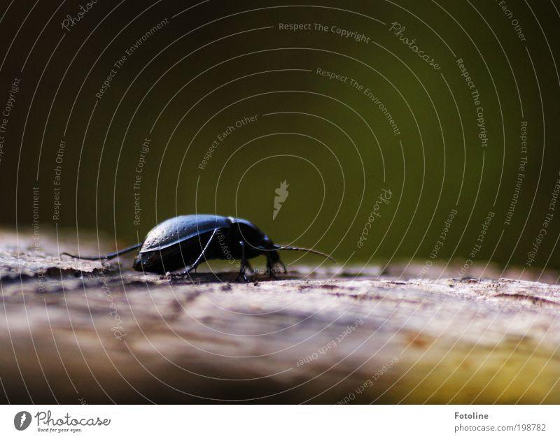 Lauf doch nicht weg... Umwelt Natur Landschaft Pflanze Tier Urelemente Luft Klima Wetter Schönes Wetter Baum Garten Park Wildtier Käfer Flügel Wärme schwarz