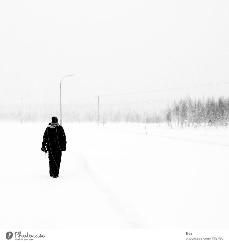 100 - der sturm Mensch Himmel Natur Mann Ferien & Urlaub & Reisen Baum Pflanze Winter Erwachsene Ferne Straße kalt Schnee Wege & Pfade Freiheit Schneefall