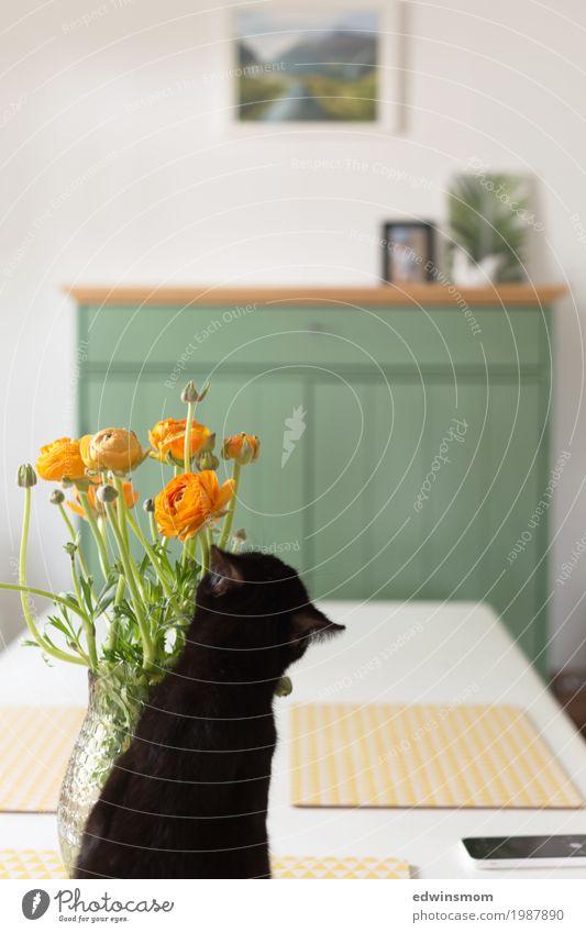 Frühling in der Nase Dekoration & Verzierung Wohnzimmer Pflanze Blume Blüte Tier Haustier Katze 1 Vase Blühend verblüht natürlich Neugier niedlich feminin wild