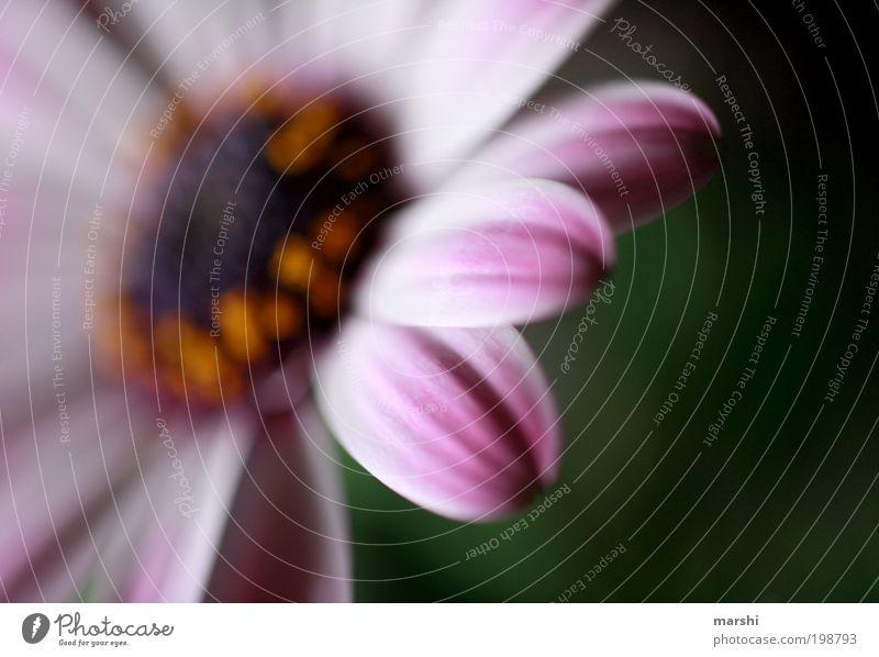 weniger ist mehr Natur schön Blume Pflanze Blüte rosa zart Blühend Blütenblatt Blütenstempel