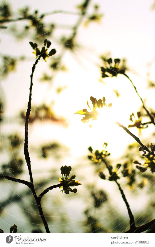zartgefühl. Umwelt Natur Pflanze Tier Luft Himmel Sonnenaufgang Sonnenuntergang Sonnenlicht Frühling Wetter Schönes Wetter Baum Grünpflanze Nutzpflanze Park