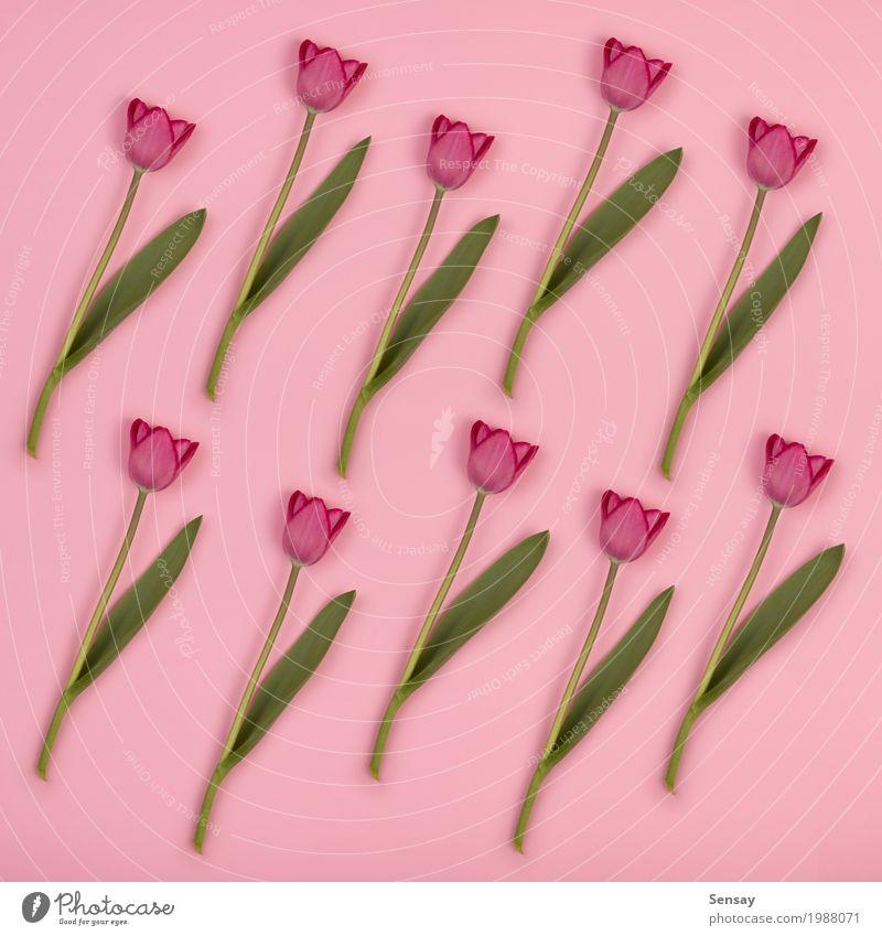 Blumenmuster mit Tulpen auf rosa Papier. Frühling Hintergrund schön Sommer Dekoration & Verzierung Natur Pflanze Blatt Blüte Wachstum frisch natürlich retro