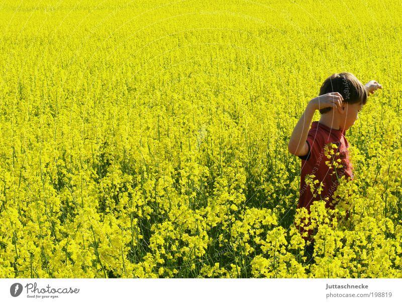 Rapsmonster Leben Sommer Sonne Mensch maskulin Kind Junge Kindheit 1 8-13 Jahre Umwelt Natur Frühling Nutzpflanze Feld Bewegung Blühend entdecken Fröhlichkeit