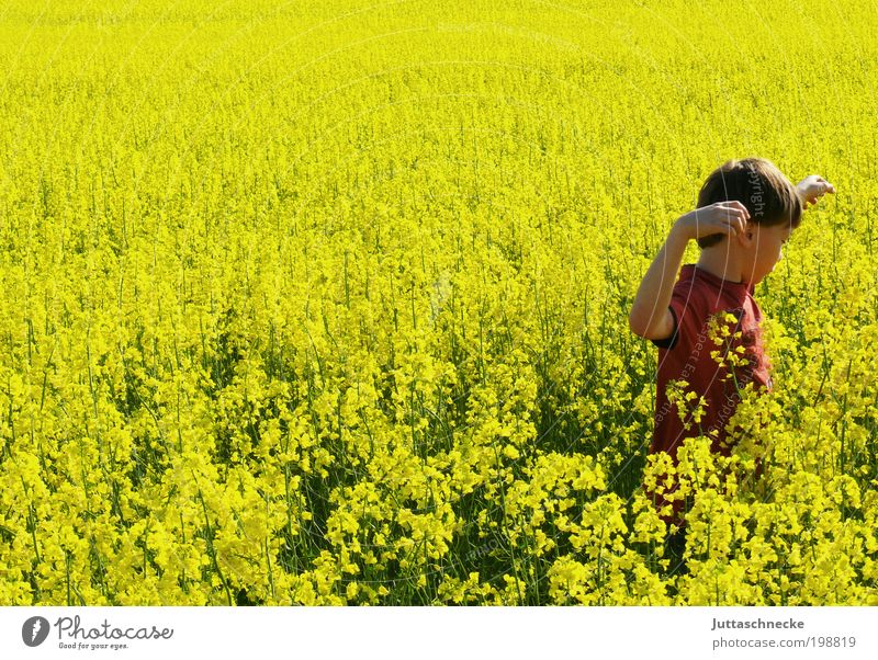 Rapsmonster Mensch Kind Natur Sonne Sommer Freude gelb Leben Umwelt Junge Bewegung Glück Frühling Kindheit Feld maskulin