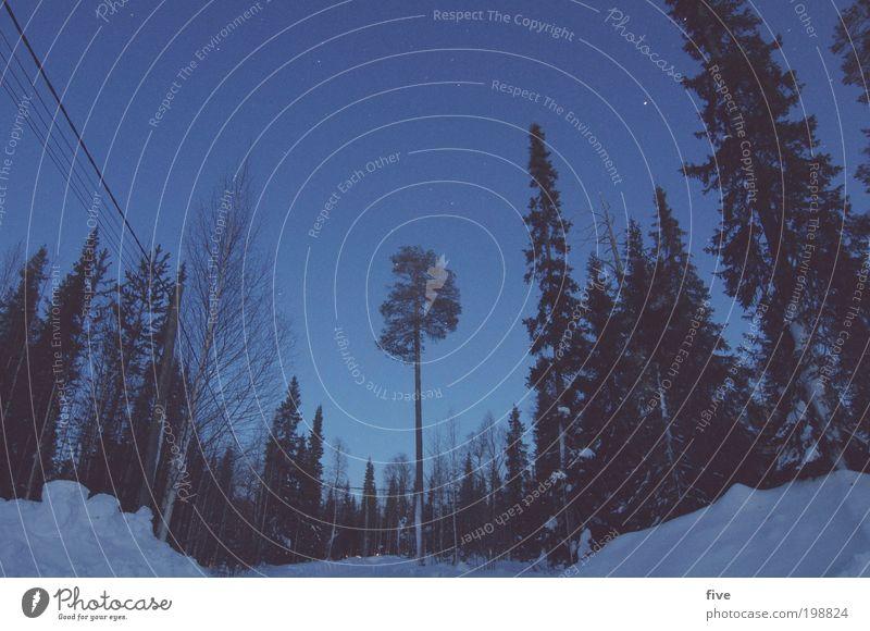 luosto XIX Himmel Natur Baum Pflanze Ferien & Urlaub & Reisen Winter Ferne Wald kalt Schnee Freiheit Landschaft Umwelt Eis Ausflug Stern