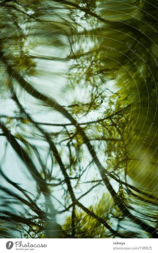 eddy I Natur Pflanze Baum Sträucher Grünpflanze Wald Urwald Wellen Seeufer bizarr geheimnisvoll Zweige u. Äste Wachstum natürlich grün türkis Wasserwirbel Geäst