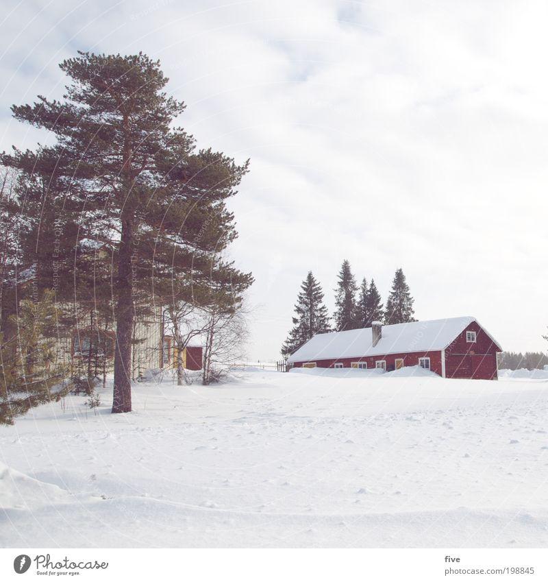 luosto XX Natur Ferien & Urlaub & Reisen Pflanze weiß Baum rot Haus Ferne Winter Wald Fenster kalt Wiese Schnee Freiheit Wohnung