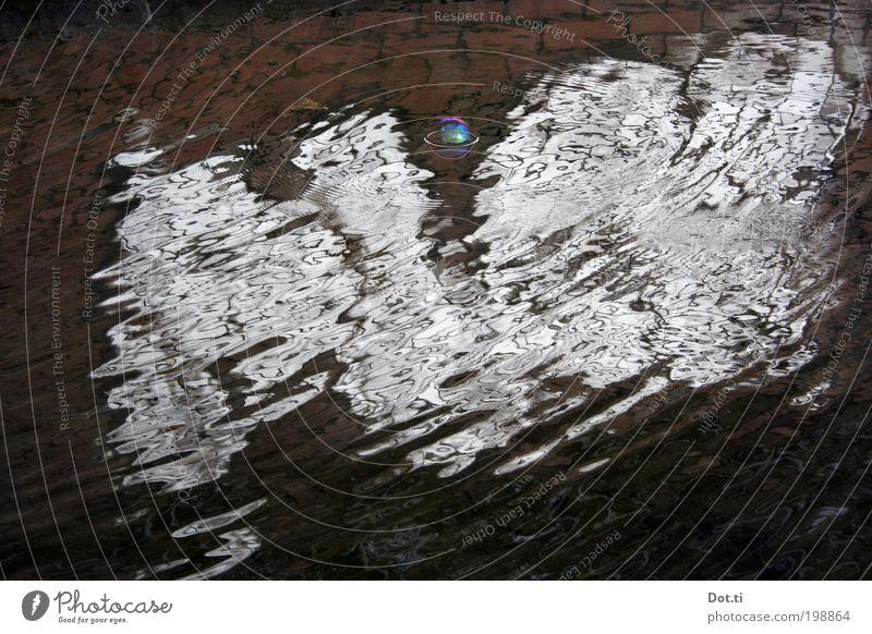 Blasenspiegelung Wasser träumen See Wellen Vergänglichkeit bizarr Teich Surrealismus abstrakt diffus regenbogenfarben schillernd Oberflächenspannung