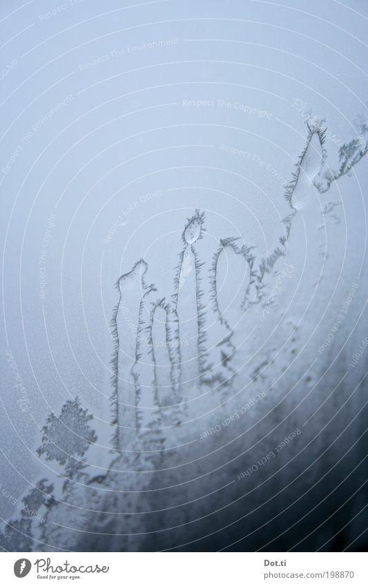 Eiskakteen Frost kalt bizarr Eisblumen Fensterscheibe durchsichtig stachelig Kaktus gefroren Winter Farbfoto Gedeckte Farben Innenaufnahme Nahaufnahme