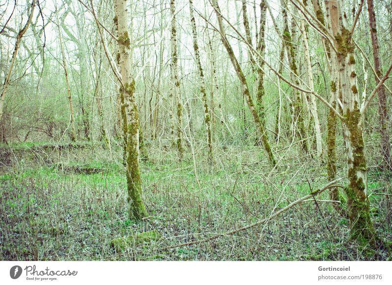 Naturschutzgebiet Umwelt Pflanze Frühling Sommer Baum Gras Sträucher Moos Wald Holz grün Spaziergang Umweltschutz Geäst Zweige u. Äste Baumstamm Baumrinde