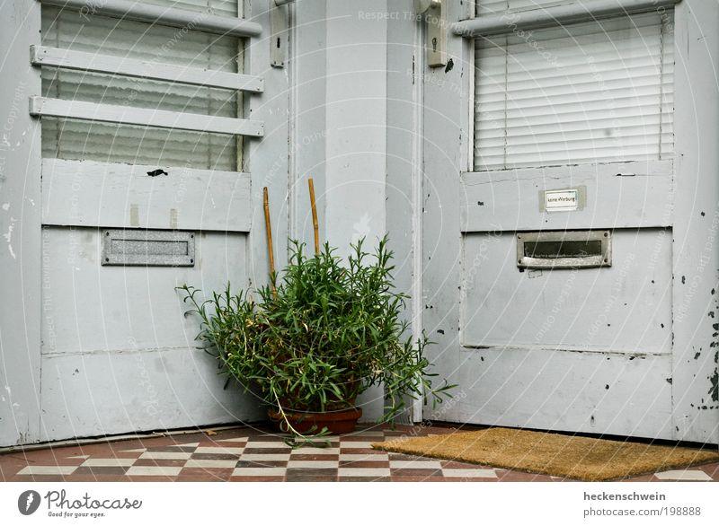 Mediator Pflanze Sträucher Blatt Grünpflanze Topfpflanze Haus Architektur Tür Fußmatte Briefkasten alt Miete grau Türknauf Namensschild Rollladen Jalousie